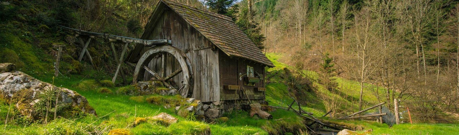 Schwarzwald Tourismus Urlaub mit Hund