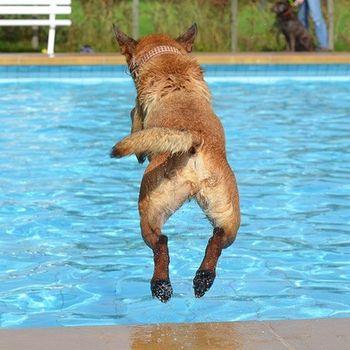 Schwimmen mit Hund im Freibad
