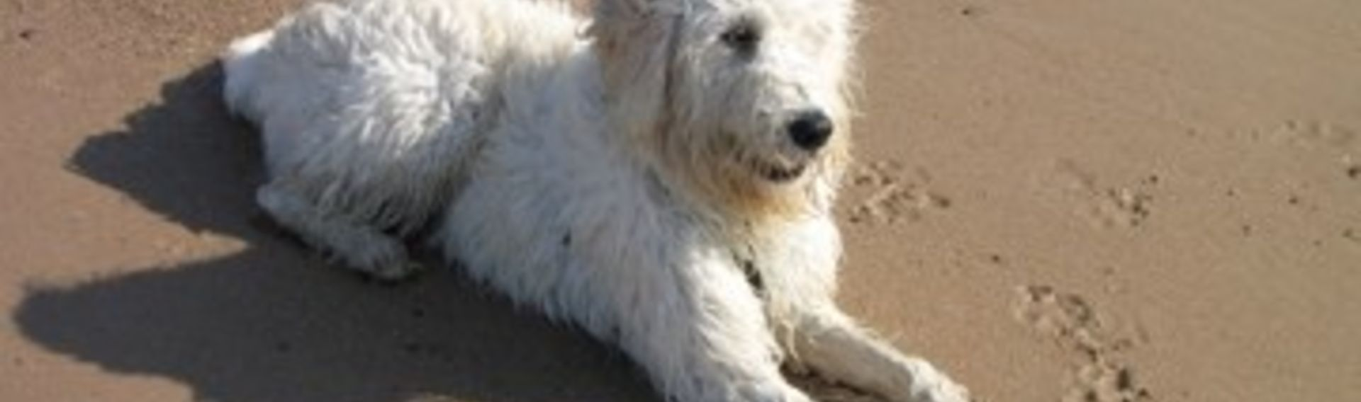 Hundestrand Urlaub Kampen mit Hund Sylt
