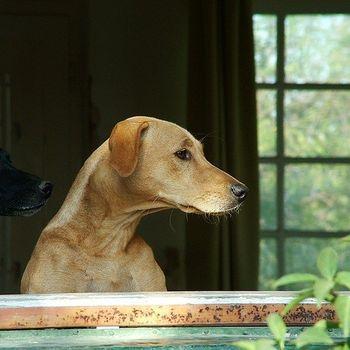 Ausflug Thüringen mit Hund
