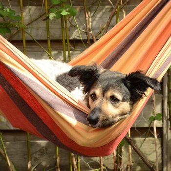 Movie Park Hund in Betreuung