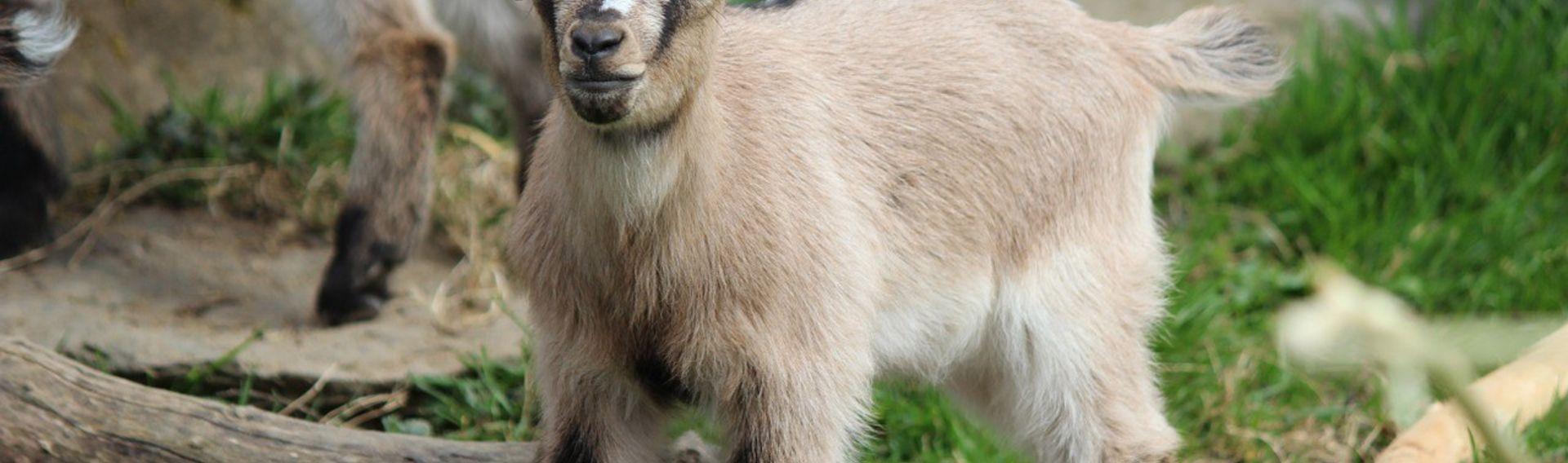 Besuch Tierpark mit Hund Thüringen