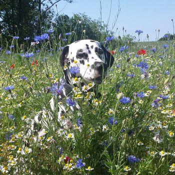Pension Usedom mit Hund