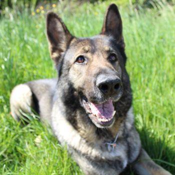 Hundeschule Frankfurt Hundetraining & Beratung