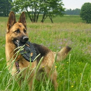 Rennsteig mit Hund Aktivurlaub Thüringer Wald