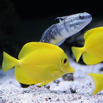 Aquarium besuchen und erkunden