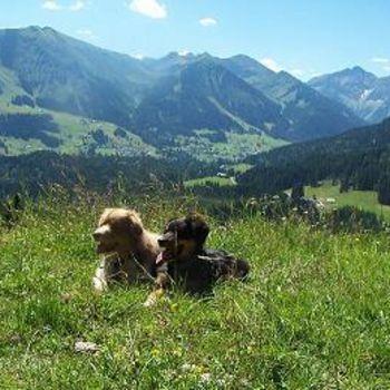 Wanderurlaub mit Hund in Österreich